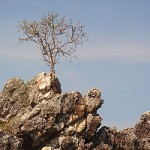 Tree on a rock -- courage