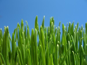 Seedling -- grass and blue